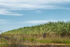 Il raccolto australiano della canna da zucchero dell'industria dello zucchero Fotografia Stock