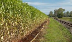 Il raccolto australiano della canna da zucchero di industria di agricoltura Fotografie Stock Libere da Diritti