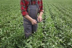 Il raccolto d'esame del fagiolo della soia dell'agricoltore nel campo facendo uso della compressa fotografia stock libera da diritti