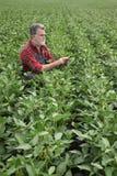 Il raccolto d'esame del fagiolo della soia dell'agricoltore nel campo facendo uso della compressa immagine stock