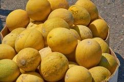 Il raccolto dei meloni Fotografia Stock