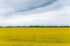 Il raccolto del Canola, nel fiore di primavera Fotografia Stock Libera da Diritti