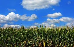 Il raccolto del cereale Fotografia Stock