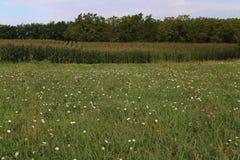 Il raccolto del cereale di Midwest di estate Immagini Stock Libere da Diritti