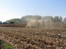 Il raccolto del cereale di mietitrebbiatura nel campo coltivato Fotografia Stock Libera da Diritti