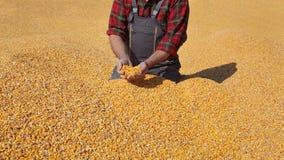 Il raccolto del cereale e dell'agricoltore fotografie stock