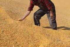 Il raccolto del cereale e dell'agricoltore fotografie stock libere da diritti