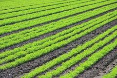 Il raccolto del coltivatore fotografia stock libera da diritti