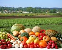 Il raccolto del coltivatore Fotografia Stock