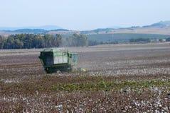 Il raccolto del cotone Fotografia Stock