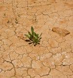 Il raccolto del deserto immagini stock