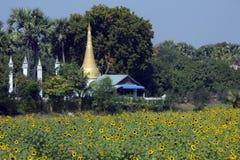 Il raccolto del fiore di Sun e Stupa buddista - Myanmar Immagine Stock Libera da Diritti