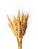 Il raccolto del grano Fotografia Stock Libera da Diritti
