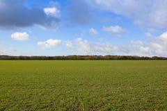 Il raccolto del grano con gli alberi Fotografie Stock Libere da Diritti