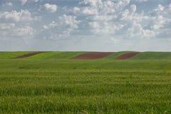 Il raccolto del grano con i lotti di aratura Fotografia Stock Libera da Diritti