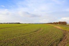 Il raccolto del grano dei wolds di Yorkshire Fotografie Stock Libere da Diritti
