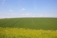 Il raccolto del grano di Hillside nella primavera Fotografie Stock Libere da Diritti