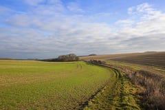 Il raccolto del grano e bridleway Immagini Stock
