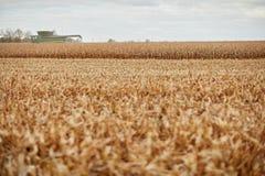 Il raccolto del grano, una stoppia e una mietitrebbiatrice asciutti Immagine Stock Libera da Diritti