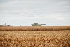 Il raccolto del grano, una stoppia e una mietitrebbiatrice dorati Fotografia Stock Libera da Diritti
