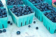 Il raccolto del mirtillo Fotografie Stock