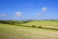 Il raccolto del pisello dei wolds di Yorkshire Fotografia Stock
