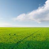 Il raccolto del riso Immagine Stock Libera da Diritti