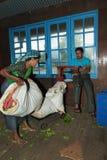 Il raccolto del tè che pesa sulla fabbrica del tè Immagini Stock Libere da Diritti