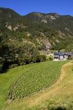 Il raccolto del tabacco in Andorra Fotografie Stock Libere da Diritti