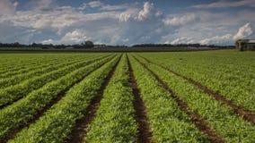 Il raccolto dell'altipiano Immagine Stock Libera da Diritti