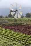 Il raccolto dell'insalata e del mulino a vento che è irrigato fotografie stock libere da diritti