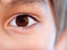 Il raccolto dell'occhio del Brown Fotografia Stock