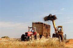 Il raccolto della canna da zucchero Fotografie Stock
