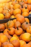 Il raccolto della zucca sul mercato Immagini Stock Libere da Diritti