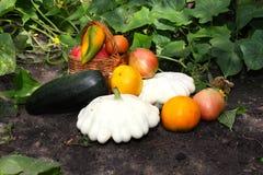 Il raccolto delle verdure Immagini Stock