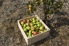 Il raccolto di autunno Fotografie Stock