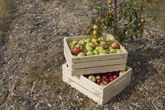 Il raccolto di autunno Fotografia Stock Libera da Diritti
