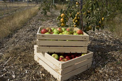 Il raccolto di autunno Fotografia Stock