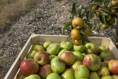 Il raccolto di autunno Immagine Stock Libera da Diritti