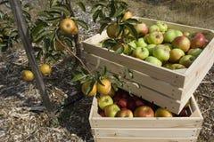 Il raccolto di autunno Immagine Stock