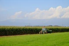 Il raccolto di cereale Fotografia Stock