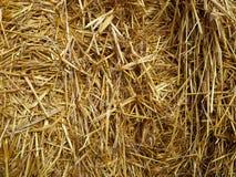 Il raccolto di grano della pila della balla di fieno in un campo Immagini Stock