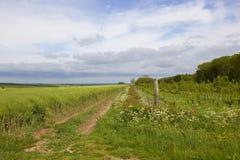 Il raccolto e terreno boscoso della colza Fotografia Stock