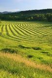 Il raccolto effettuato in Stowe, Vermont Fotografia Stock