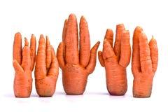 Il raccolto insolito delle carote Fotografia Stock