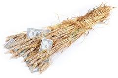 Il raccolto ricco Fotografia Stock Libera da Diritti
