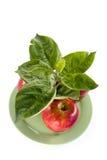 Il raccolto ricco della mela Fotografia Stock