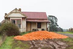 Il raccolto scaricato Tasmania della carota Fotografie Stock Libere da Diritti