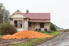 Il raccolto scaricato Tasmania della carota Immagini Stock Libere da Diritti