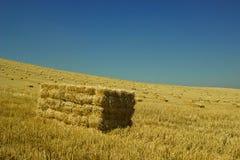 Il raccolto Torrelaguna del grano Fotografia Stock